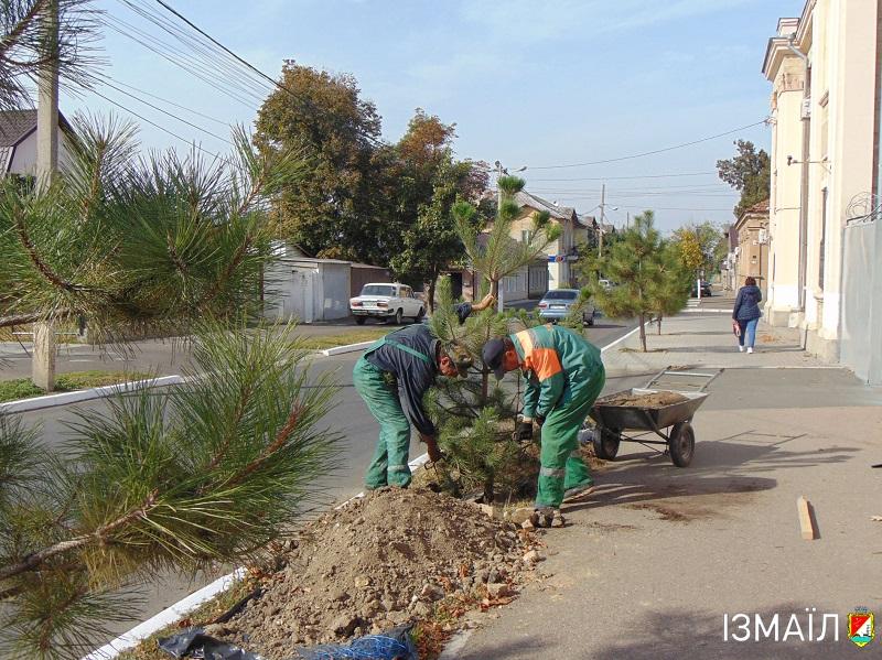 У місті на Авраамівській та інших вулицях масово садять дерева